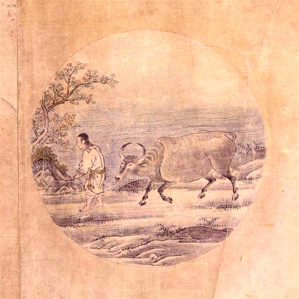 Das Zähmen des Ochsen